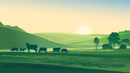 landschaft: Sommermorgen. Landwirtschaftliche Landschaft und Kühe. Illustration