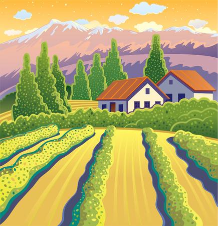 morning dew: Solar Landscape with vineyard. Illustration