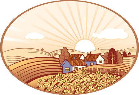 farm field: Summer rural landscape with sunflowers Illustration
