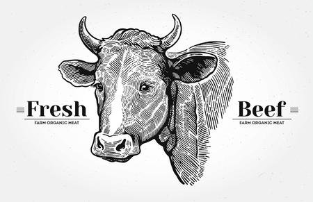 """소, 그래픽 스타일에 그려진 손을 머리. 단어 """"신선한 쇠고기""""와."""