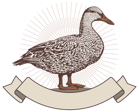 Duck graphically style. Çizim