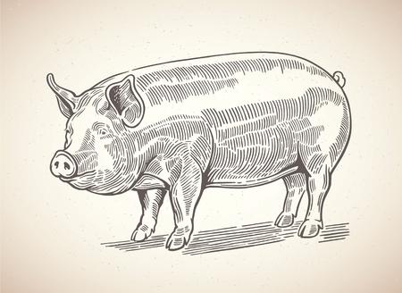 Illustratie van varken in grafische stijl. Tekenen met de hand. Stock Illustratie