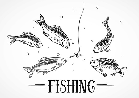 hunger: Hunger fish attack to the a hook (bait). Illustration about fishing. Illustration