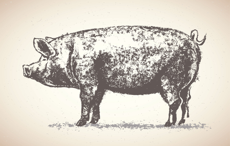 corral: Graphic pig drawn by hand