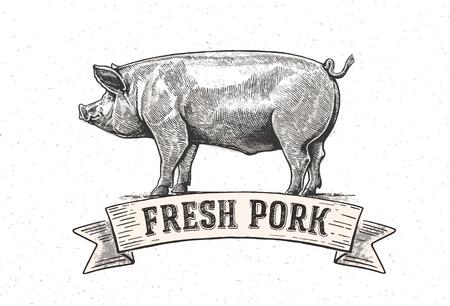 """Gráfico del cerdo con la inscripción: """"cerdo fresco"""". Ilustración de vector"""