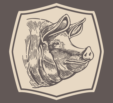 corral: Head to a pig, style engraving.