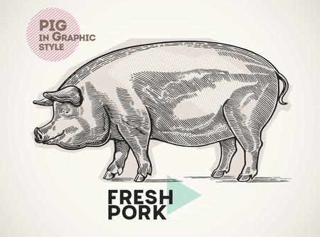 Świnia w stylu graficznego, rysowane ręcznie. Ilustracje wektorowe