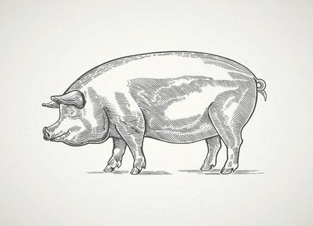 Schwein im grafischen Stil, von Hand gezeichnete Illustration.