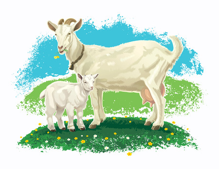 Goat with kid on a meadow and rural landscape.