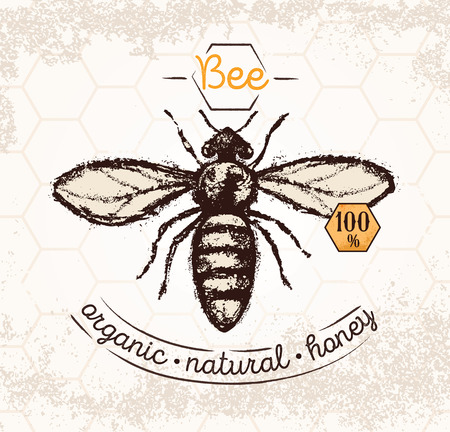 Bee, hand drawn illustrations, on the textured background and thematic inscription. Illustration