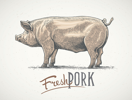 Pig in graphic style, hand-drawn Illustration.