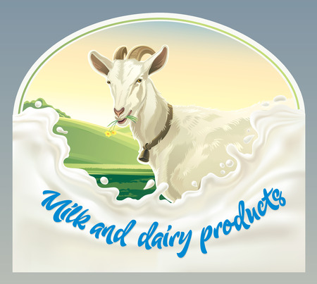 wholesome: Goat, in frame from splash of milk against the background of a rural landscape. Vector illustration.