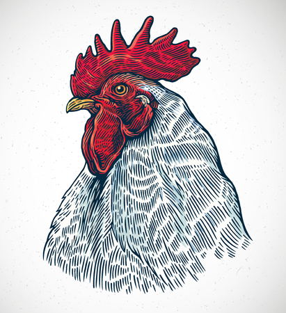 Rooster head in graphic style and painted in color.