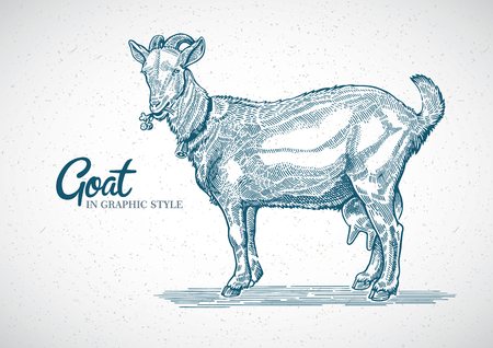 Goat in graphic style. Hand drawn and converted to vector Illustration Çizim