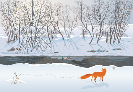 Fox in the winter forest hunting a duck Ilustração
