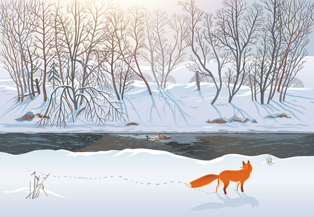 Winter forest with a fox that tries to hunt two ducks in the river. Raster illustration. 스톡 콘텐츠