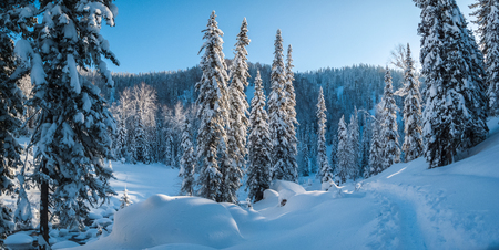 Winter forest landscape with hills and trails in deep snow 写真素材