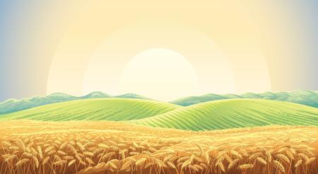 Letni krajobraz z polem dojrzałej pszenicy oraz wzgórzami i dolinami w tle