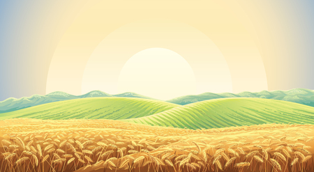 Summer landscape with a field of ripe wheat, and hills and dales in the background Illustration