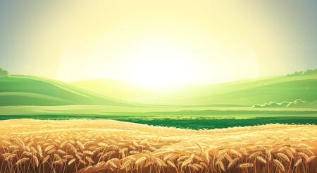 Paysage d'été avec un champ de blé mûr et des collines et des vallons en arrière-plan. Illustration raster.