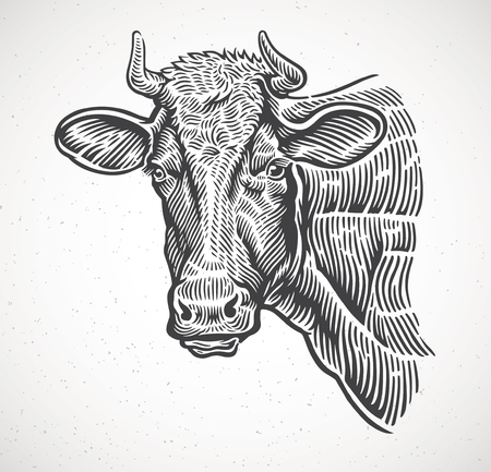 Cows head, in a graphic style vector illustration.