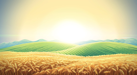 Summer landscape with a field of ripe wheat, and hills and dales in the background. Raster illustration. Standard-Bild - 104915063