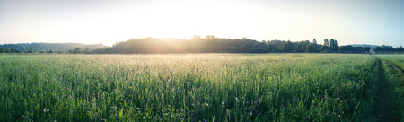 Rural landscape, morning sunrise over the green meadow and forest