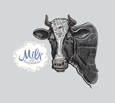 Cows head, in a grahic style in color, and spot from splash milk for inscription, as a design element Illustration