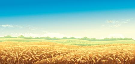 Paisaje rural con campos de trigo y verdes colinas de fondo. Ilustración de vector.