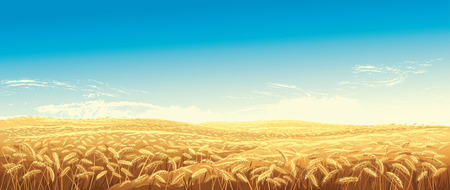 Rural landscape with wheat fields and green hills on background. Vector illustration. Standard-Bild - 110087468