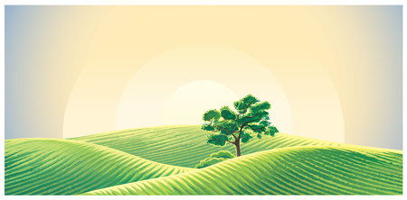 Rural dawn landscape with fields and a lonely tree.
