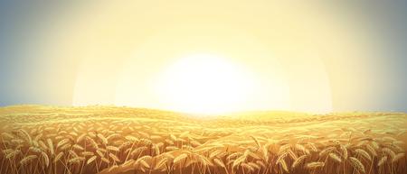 Landelijk landschap met een veld van tarwe en zonsopgang aan de hemel