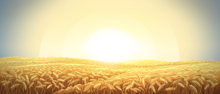 Rural landscape with a field of wheat and sunrise in the sky
