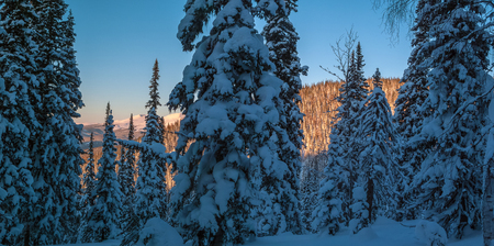 Winter mountain landscape with litter trees in the foreground, lit by sunset. Panoramic photo. Stock Photo