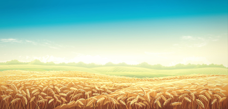 Rural landscape with wheat fields and green hills on background. Raster illustration.