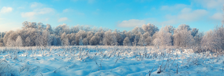 Panoramic photo of winter forest with snow-covered trees