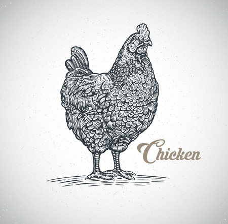 Chicken drawn in a graphic (engraved) style.