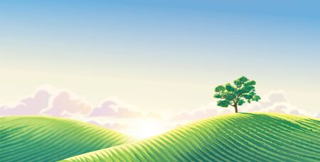 Rural dawn landscape with sown fields and a lonely tree. Raster illustration.