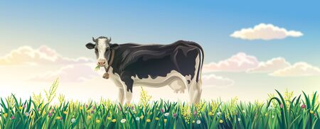 Rural summer landscape with cow. Cow in a rural meadow among flowering grasses. Raster illustration.