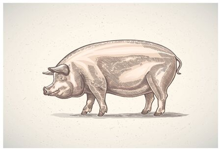 Pig in graphic style, painted in color, hand-drawn Illustration.