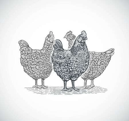Group of three chickens, in graphic (engraved) style.