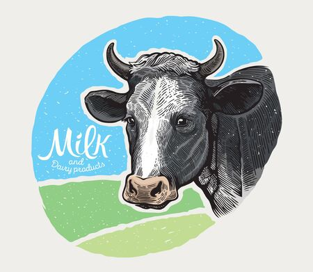 Cows head, in a graphic style hand drawn illustration and painted in color.