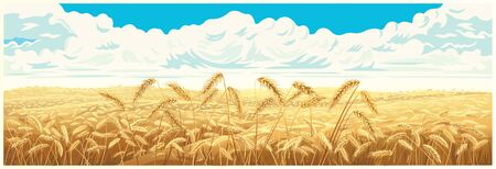 Rural landscape with wheat field and a blue sky with clouds on background. Vector illustration.