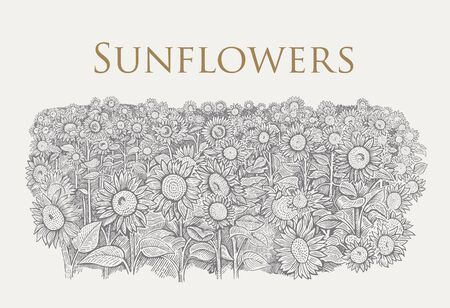 Field of sunflowers drawn in graphic style.