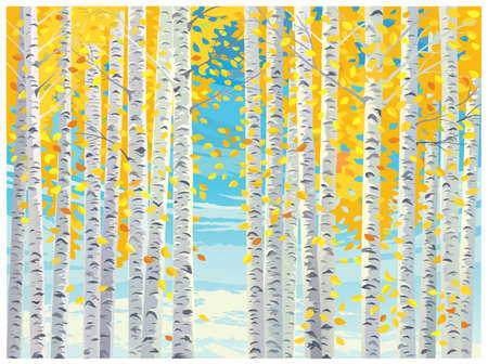 Autumn landscape, with birch trees and yellow autumn leaves falling to the ground.