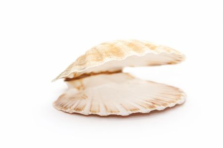 open seashell photo