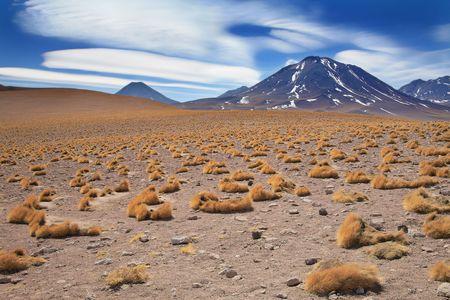 chile: altiplano grass paja brava close to volcano Miscanti, desert Atacama, Chile