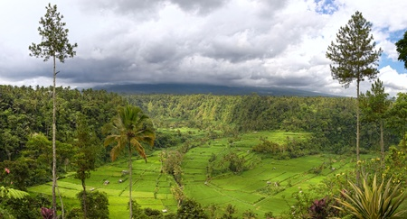 panorama of valley with rice field terraces and view on mount Agung, Bali, Indonesia photo