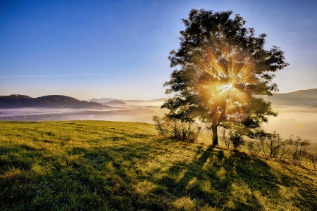 sunrise beams through the foggy tree in the national park Bohemian Switzerland, Czech Republic