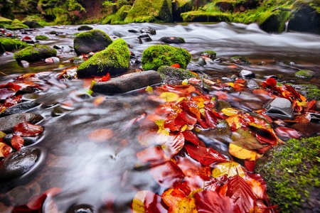 river Kamenice in autumn with long exposure, Bohemian Switzerland, Czech Republic photo